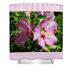 Shower Curtain featuring the photograph Aphrodite Rose Of Sharon Hibiscus 9 by Brooks Garten Hauschild