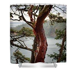 Arbutus Tree Shower Curtain
