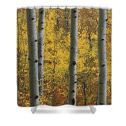 Aspen In Autumn At Mcclure Pass Shower Curtain