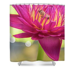 Attraction. Shower Curtain