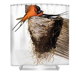Audubon: Swallow Shower Curtain by Granger
