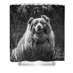 Australian Shepherd Dog Shower Curtain