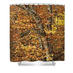 Autumn Colors Shower Curtain by Andrew Soundarajan