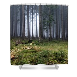 Autumn Fog In The Spruce Forest Shower Curtain