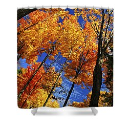Autumn Forest Shower Curtain by Elena Elisseeva