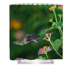 Awesome Beauty Shower Curtain by Donna Brown