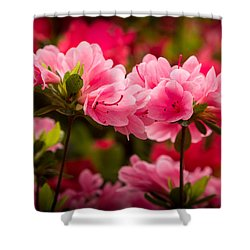 Blooming Delight Shower Curtain by Denis Lemay
