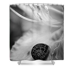 B And White Floral With Snail Shower Curtain