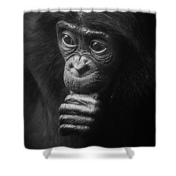 Shower Curtain featuring the photograph Baby Bonobo Portrait by Helga Koehrer-Wagner