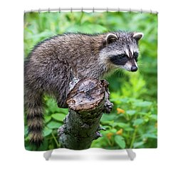 Shower Curtain featuring the photograph Baby Racoon by Paul Freidlund