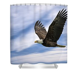 Bald Eagle - 365-12 Shower Curtain
