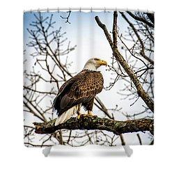 Bald Eagle Majesty Shower Curtain