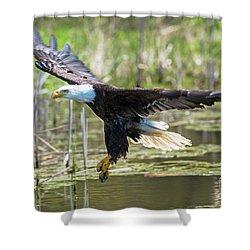 Bald Eagle-3175 Shower Curtain