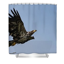 Bald Eaglet Shower Curtain