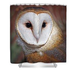 Barn Owl Shower Curtain by Elaine Malott