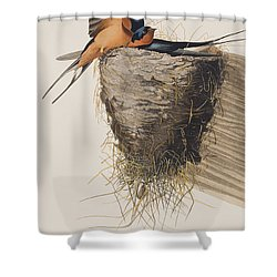 Barn Swallow Shower Curtain by John James Audubon
