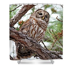 Barred Owl In Pine Tree Shower Curtain
