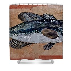 Bass Shower Curtain by Andrew Drozdowicz