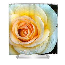 Bathing Beauty Shower Curtain