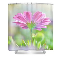 Beautiful Daisy Flower Shower Curtain