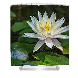 Beautiful Lotus Shower Curtain