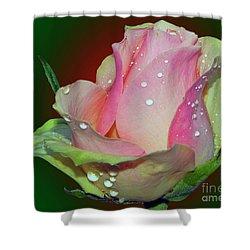 Beautiful Rose Shower Curtain by Elvira Ladocki