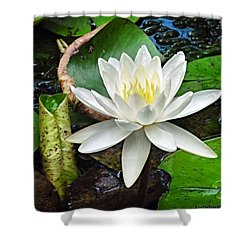 #beautiful #water #lily At Mayfield Shower Curtain by Austin Tuxedo Cat