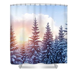 Beautiful Winter Forest Shower Curtain