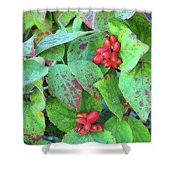Berries Shower Curtain