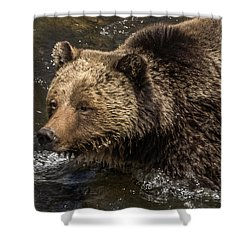 Beryl Springs Sow In The River Shower Curtain