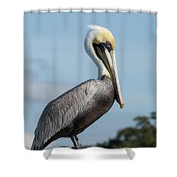 Biloxi Pelican Shower Curtain