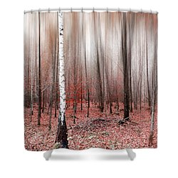 Shower Curtain featuring the photograph Birchforest In Fall by Hannes Cmarits