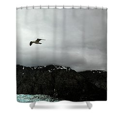Shower Curtain featuring the photograph Bird Over Glacier - Alaska by Madeline Ellis