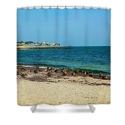 Shower Curtain featuring the photograph Birds On The Beach by Madeline Ellis