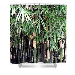 Black Bamboo Shower Curtain by Mary Deal