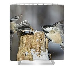 Shower Curtain featuring the photograph Black-capped Chickadee In Winter by Mircea Costina Photography