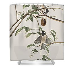 Black Capped Titmouse Shower Curtain