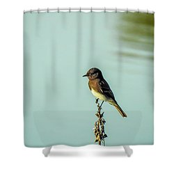 Black Phoebe Shower Curtain