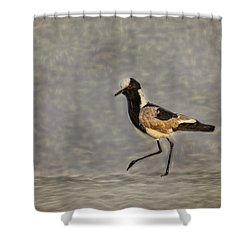 Black-winged Lapwing Glow Shower Curtain by Kay Brewer