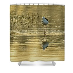 Black-winged Stilt Shower Curtain
