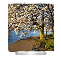 Blossoming Cherry Trees Shower Curtain by Brian Jannsen