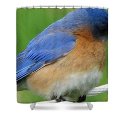 Shower Curtain featuring the painting Blue Bird by Betty Pieper