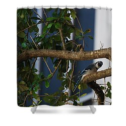 Shower Curtain featuring the photograph Blue Bird by Rob Hans