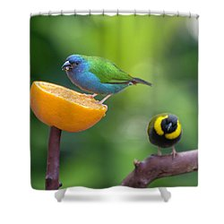 Blue-faced Parrotfinch Shower Curtain