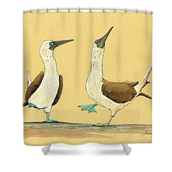 Blue Footed Boobies Shower Curtain