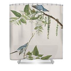 Blue Grey Flycatcher Shower Curtain