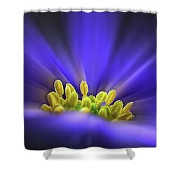 blue Shades - An Anemone Blanda Shower Curtain by John Edwards