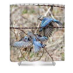 Bluebird Battle Shower Curtain by Mike Dawson