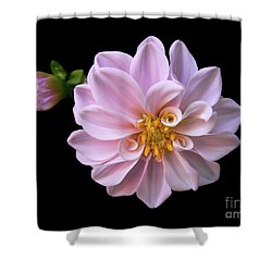 Blushing Shower Curtain by Doug Norkum
