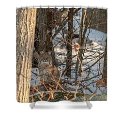 Shower Curtain featuring the photograph Bobcat by Brenda Jacobs